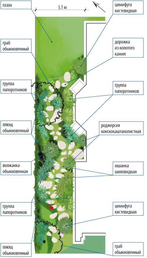 Узкий участок. Идеи оформления. Сад из папоротников