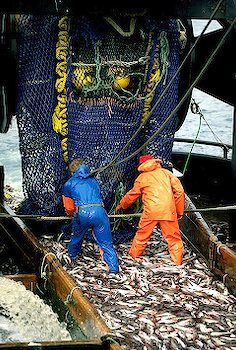 commercial pollack fishing, Alaska