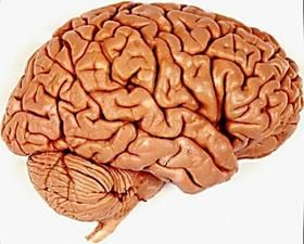 brain injury workbook exercises for cognitive rehabilitation pdf