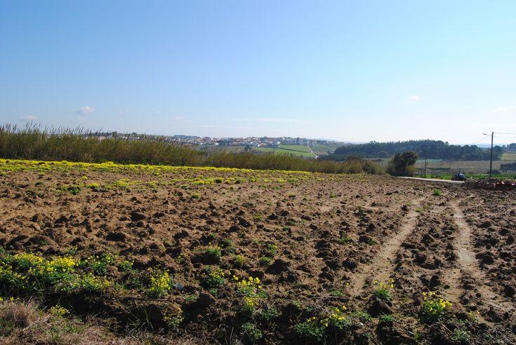 Terreno c/ projecto aprovado para 2 moradias - a 10 min. da Lourinhã. Terreno com 3.116 m2.
