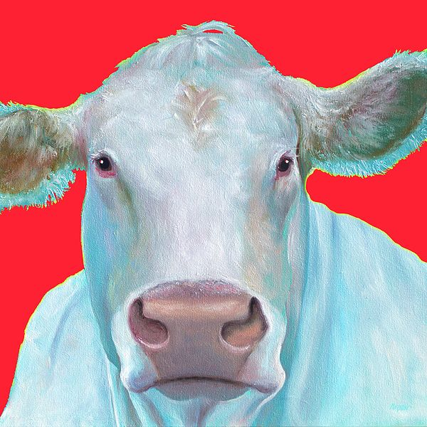 Charolais cow for kitchen wall decor, cattle ranch, cafe or just the cow lover! #kitchendecor #cattleranch