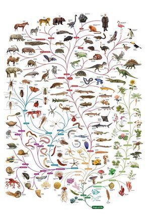 Charles Darwin tree-of-life poster   The Open University: