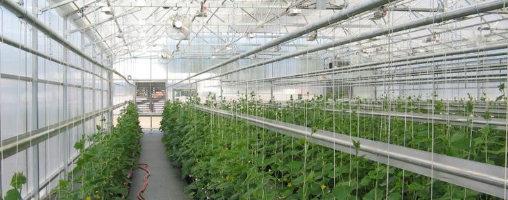 Top Commercial Greenhouse Construction Company | Vegetable, Education & Research