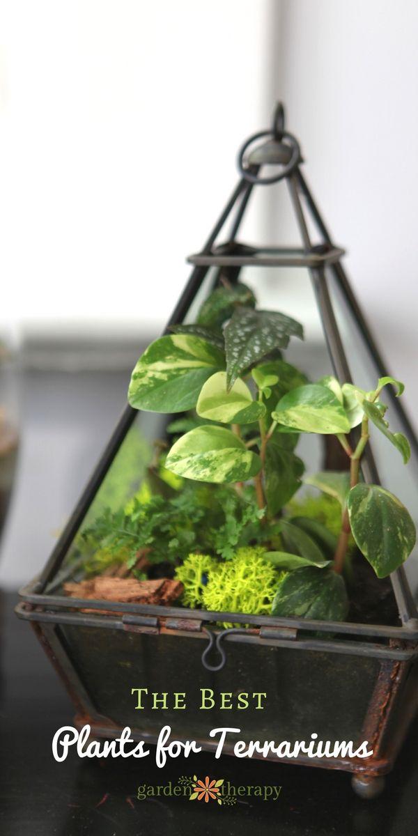 10 Perfect Indoor Plants for Terrariums & Best 25+ Terrarium plants ideas on Pinterest | Terranium ideas ... azcodes.com