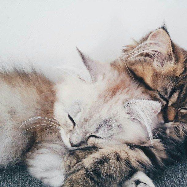 Lovelies Xoxo Cats Pets Cute Cat Aesthetic Baby Cats Cute Animals