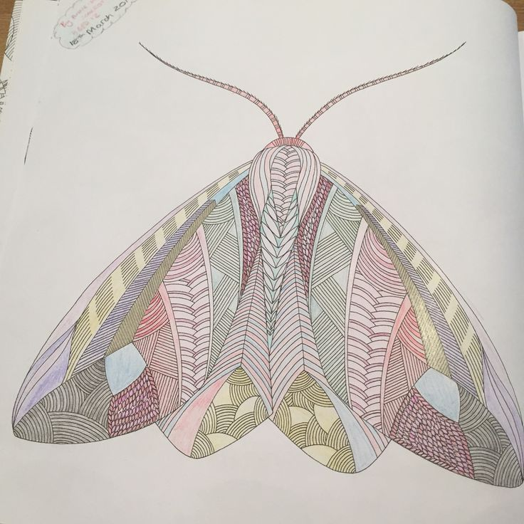 Pink delicate moth