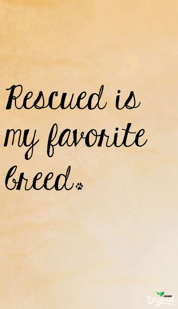 There is no greater joy than rescuing a pet in need.
