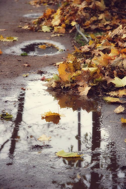 Awesome These Dark Days Of Autumn Rain
