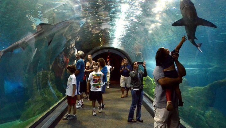 The Adventure Aquarium | Camden, NJ