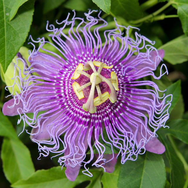 15 Of The Craziest Looking Flowers From Near And Far