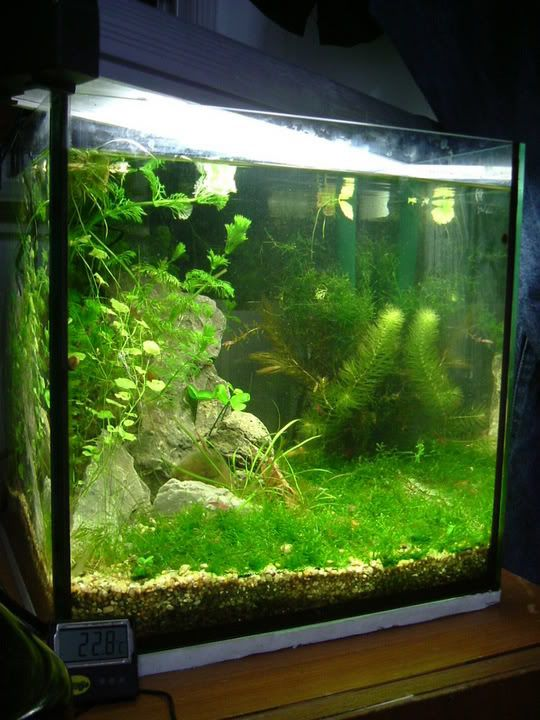 17 best images about cube aquascape ideas on pinterest for Shrimp fish tank