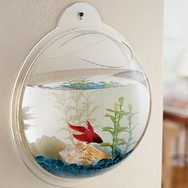 Fish bowls that hang on walls? Yes please. I actually have a system kinda like this - ornate, antiqued metal holders for small plant pots, but I used the clear glass fish bowls instead and put fish on the wall. Now if the kids would stop playing ball in the hallway and knocking them out :/