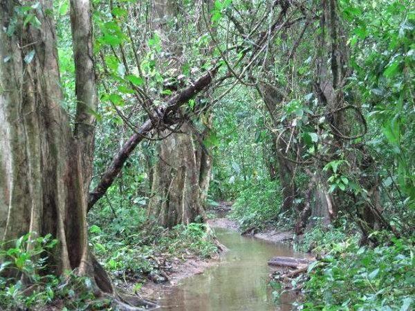 Bosque tropical lluvioso, america central, costa rica. Problema ambiental: inundaciones