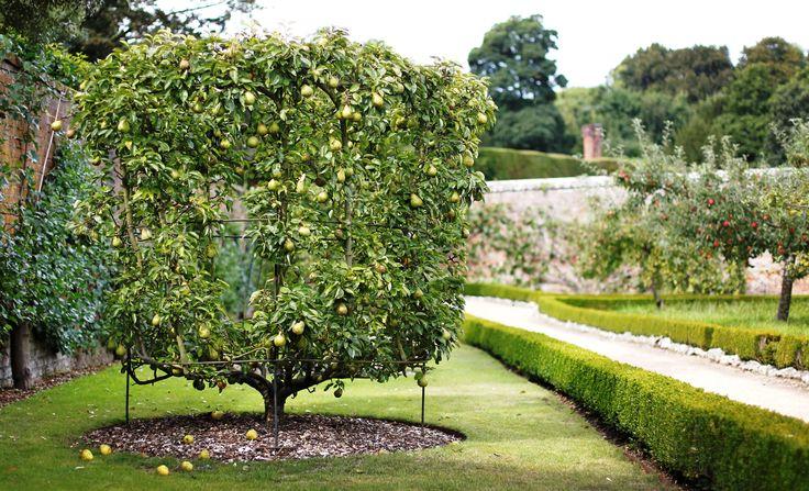 158 best images about Espalier on Pinterest Gardens