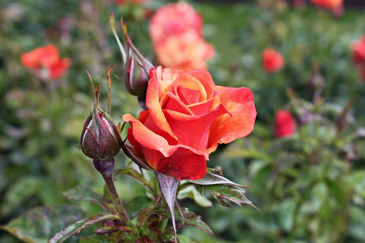 Taken by Aneta Blak | MORE on: http://anetasygula.wix.com/photography