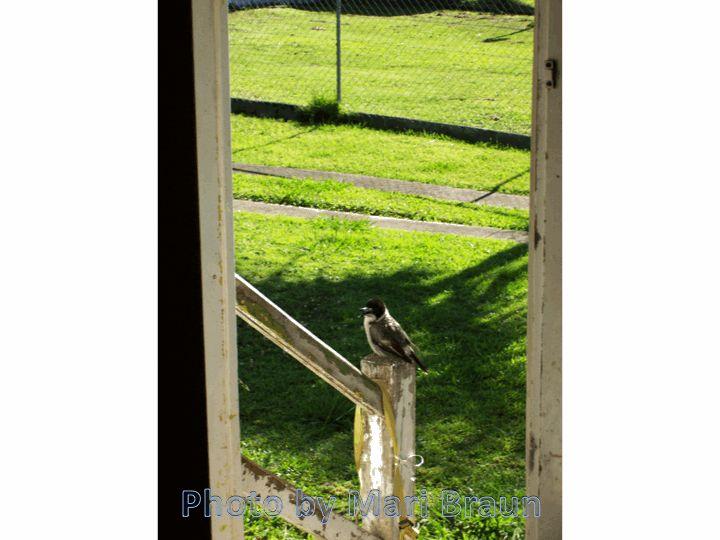 Caroler at the door