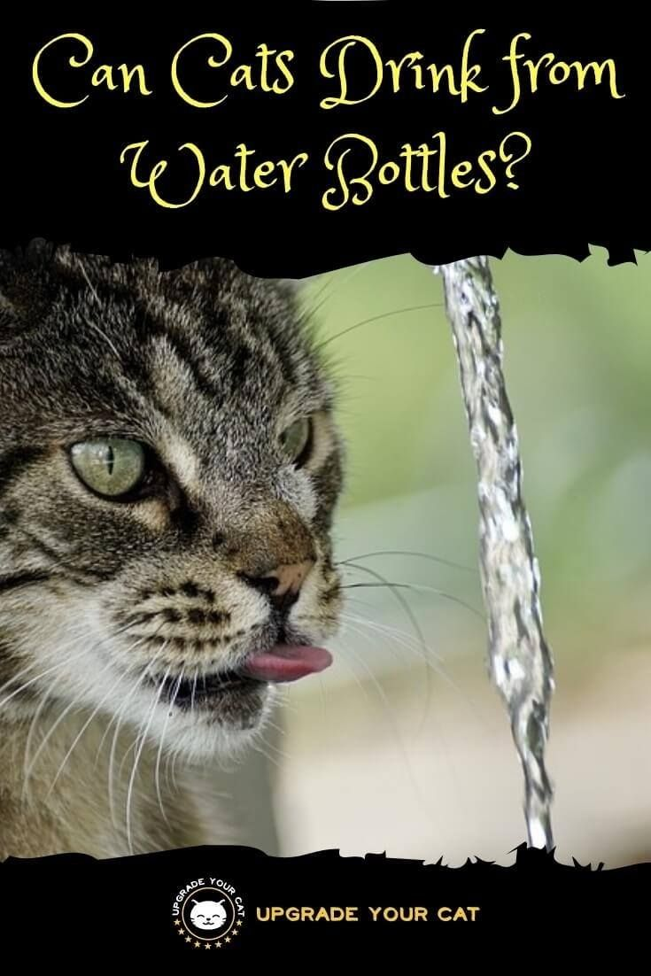 Can Cats Drink From Water Bottles Yes And Why They Do Upgrade Your Cat Cat Drinking Cat Health Cat Health Care