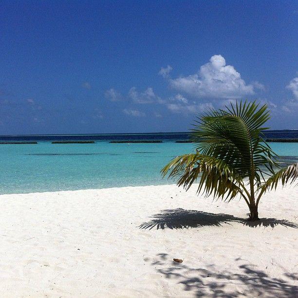 Här ska vi tillbringa dagen. Ön #constance moofushi är inte stor man går runt ön på 15 minuter. #maldiverna #jordenruntmedving #ving #vingresor Läs mer om Maldiverna på http://www.ving.se/maldiverna/maldiverna