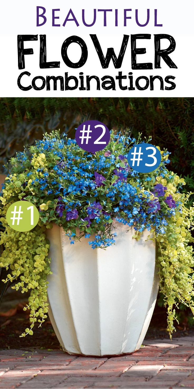 Beautiful flower container! 1. Goldilocks Creeping Jenny, 2. Supertunia Double Dark Blue Petunia, and 3. Laguna Sky Blue Lobelia. Love it! I want to repeat this combination around the garden. Win $250 in flowers to make your garden pop with the Proven Winners Dream Garden Sweepstakes #ad