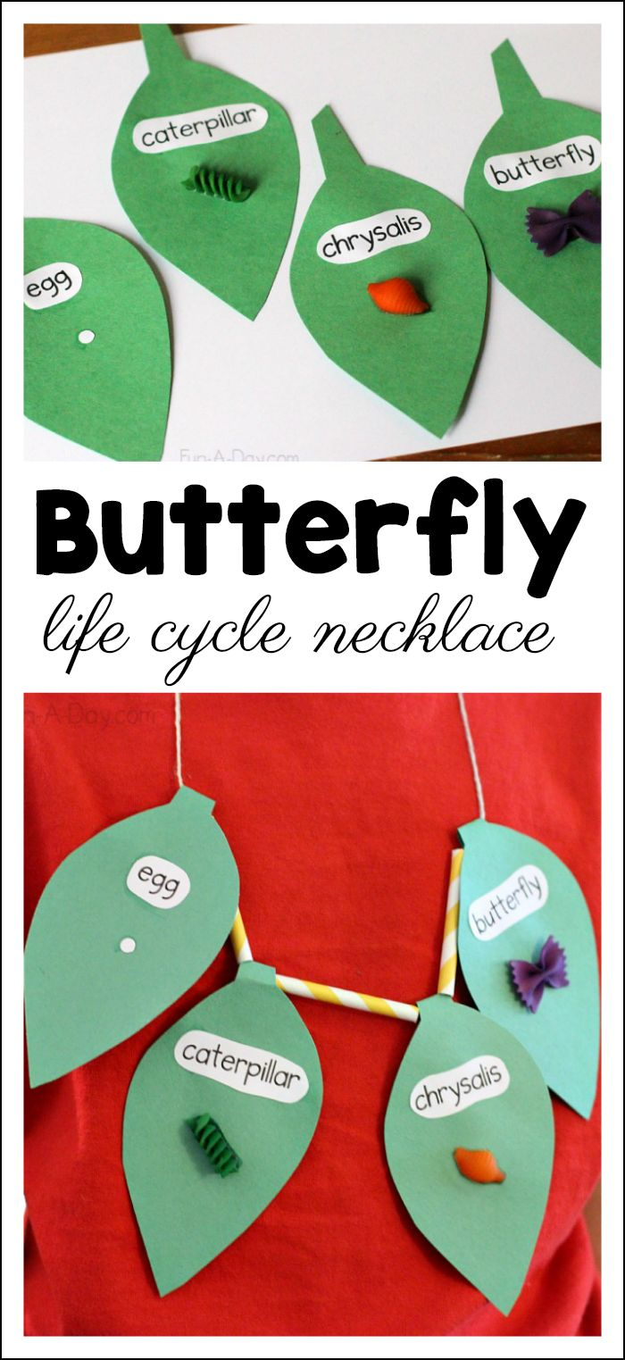 Butterfly Life Cycle Craft Necklace the Kids Can MakeMary Catherine @ Fun-A-Day!