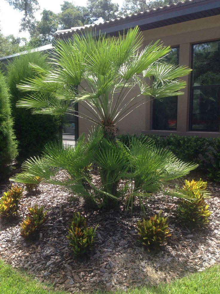 Die besten 25 european fan palm ideen auf pinterest for Palmier factice