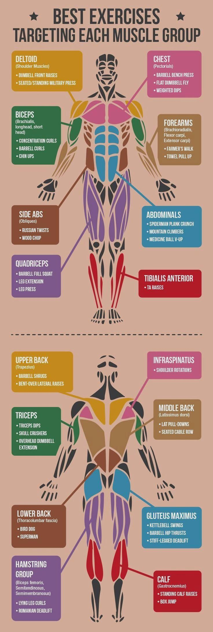 *CLICK FOR ALL EXERC  *CLICK FOR ALL EXERCISES* Best Exercises Targeting Each Muscle Group