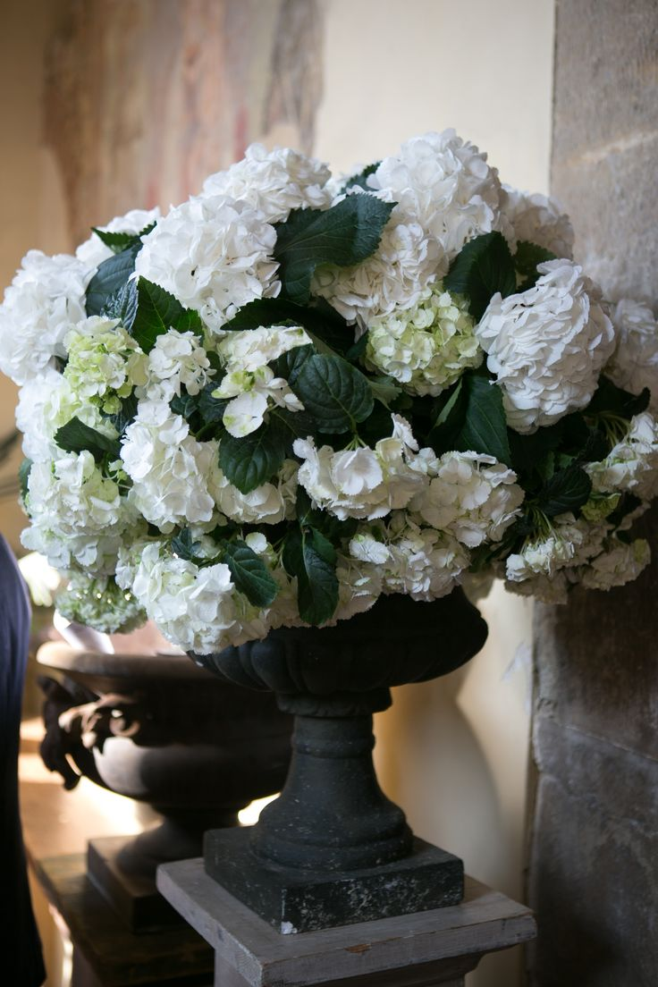 Delicate hydrangeas to decorate the entrance of the ancient church. Wedding ceremony is about to begin.