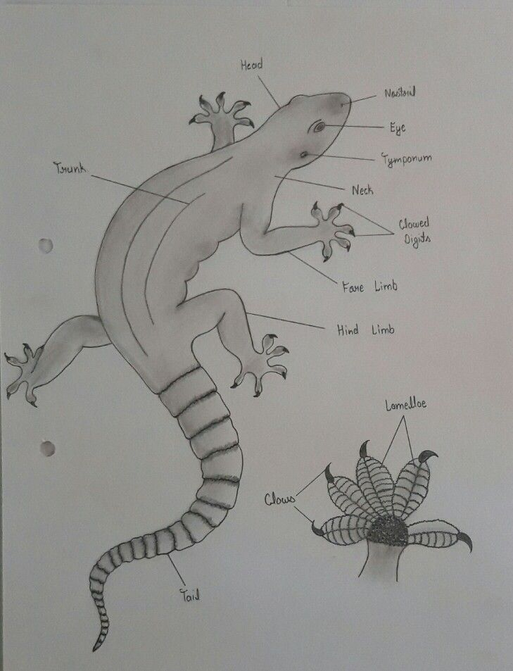 Biology Biology Lizard Humanoid Sketch