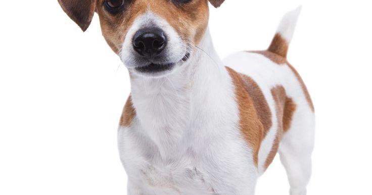 Cómo tratar los ácaros y las infecciones por levaduras de los oídos de los perros con remedios caseros. Los ácaros y las infecciones por levaduras del oído son dos enfermedades caninas comunes, especialmente en los perros de orejas largas. Algunas señales de que tu perro puede tener un problema en el oído pueden ser: rascarse excesivamente las orejas y expedir un olor anormal proveniente de la oreja. Un perro con problemas de oído también puede ...
