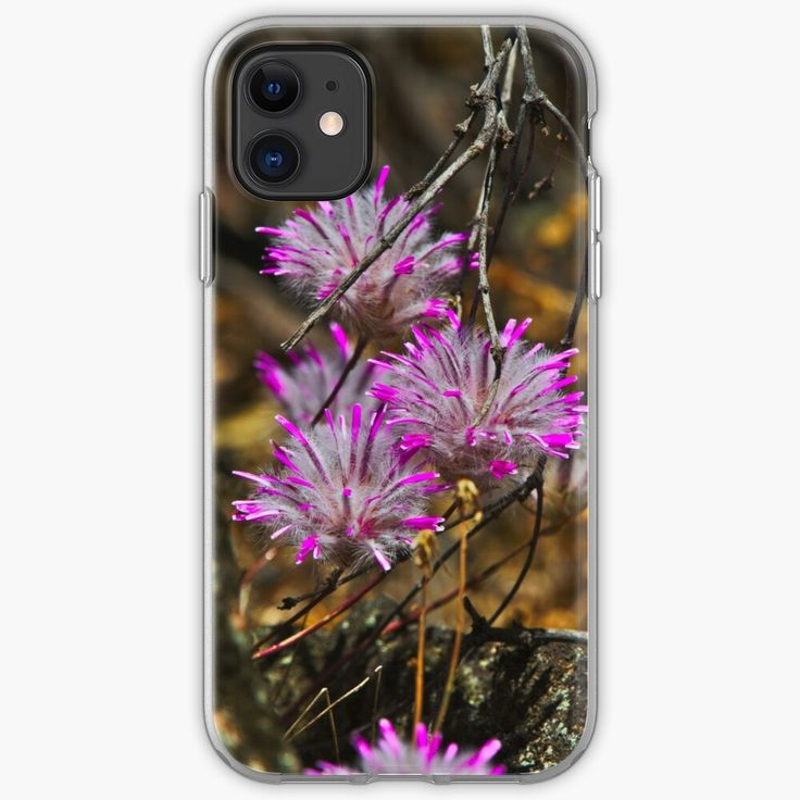 Pink wildflowers in the dryandra woodlands western