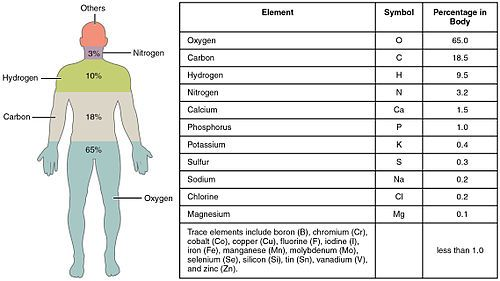 Composition of the human body - Wikipedia, the free encyclopedia