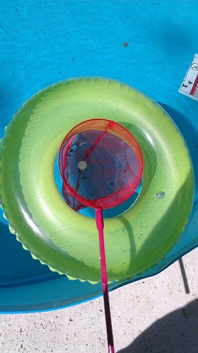 To keep my kiddie pool clean I put chlorine tabs in a ...