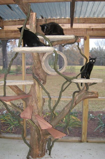 8 best images about kitty jungle gym on pinterest cats for Living room jungle gym