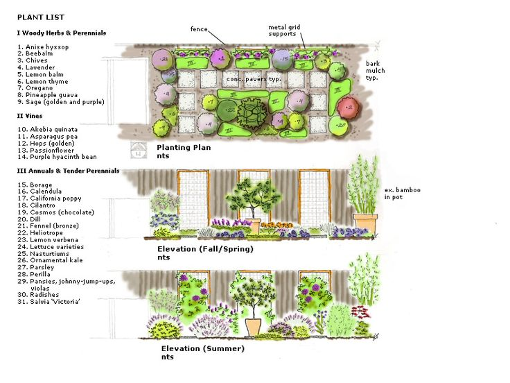 rendered planting plan flower garden