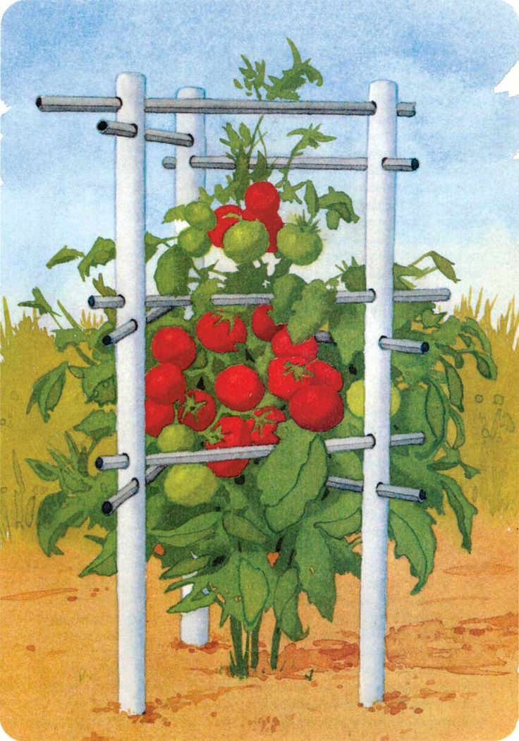 Building with plastic pipe creates a super-durable tomato cage. This isn't the cheapest tomato cage option, but it may well be the sturdiest...