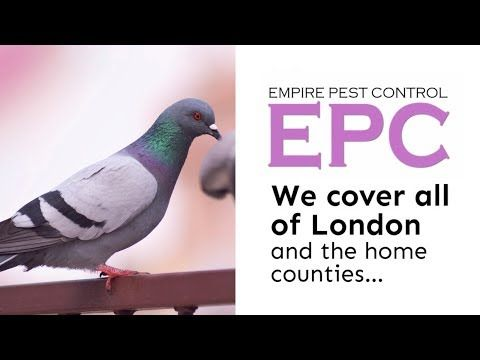 PIGEON CONTROL LONDON UK ~ PROOF & GET RID OF PIGEONS ~ EMPIRE PEST CONTROL LONDON - YouTube