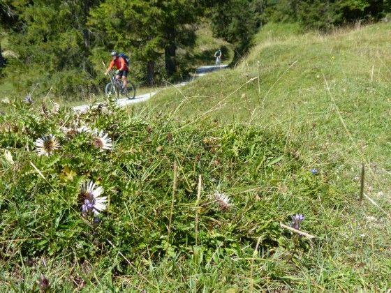 Mountainbike-Touren für Einsteiger