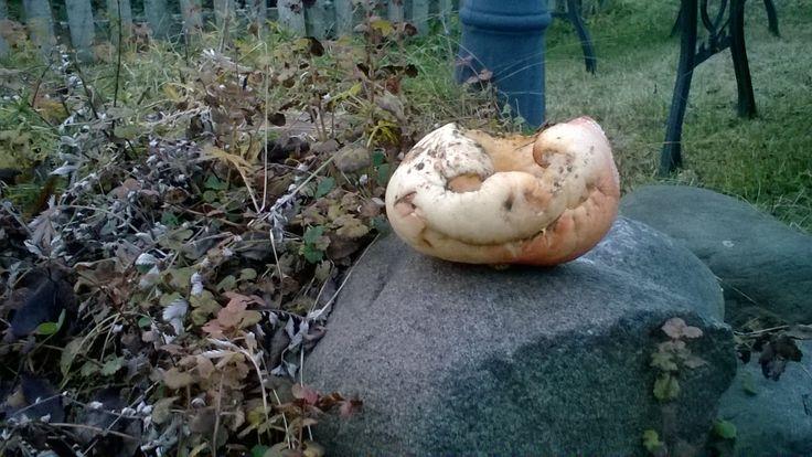 Mardipäev Estonian Halloween