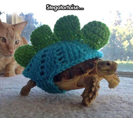 if i ever get a turtle i will make him a stegosaurus costume :)