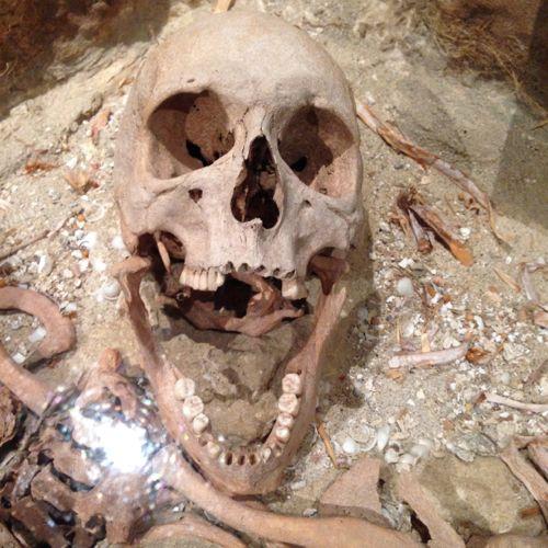 WA Shipwreck Galleries museum - Skull Displayed in Gallery