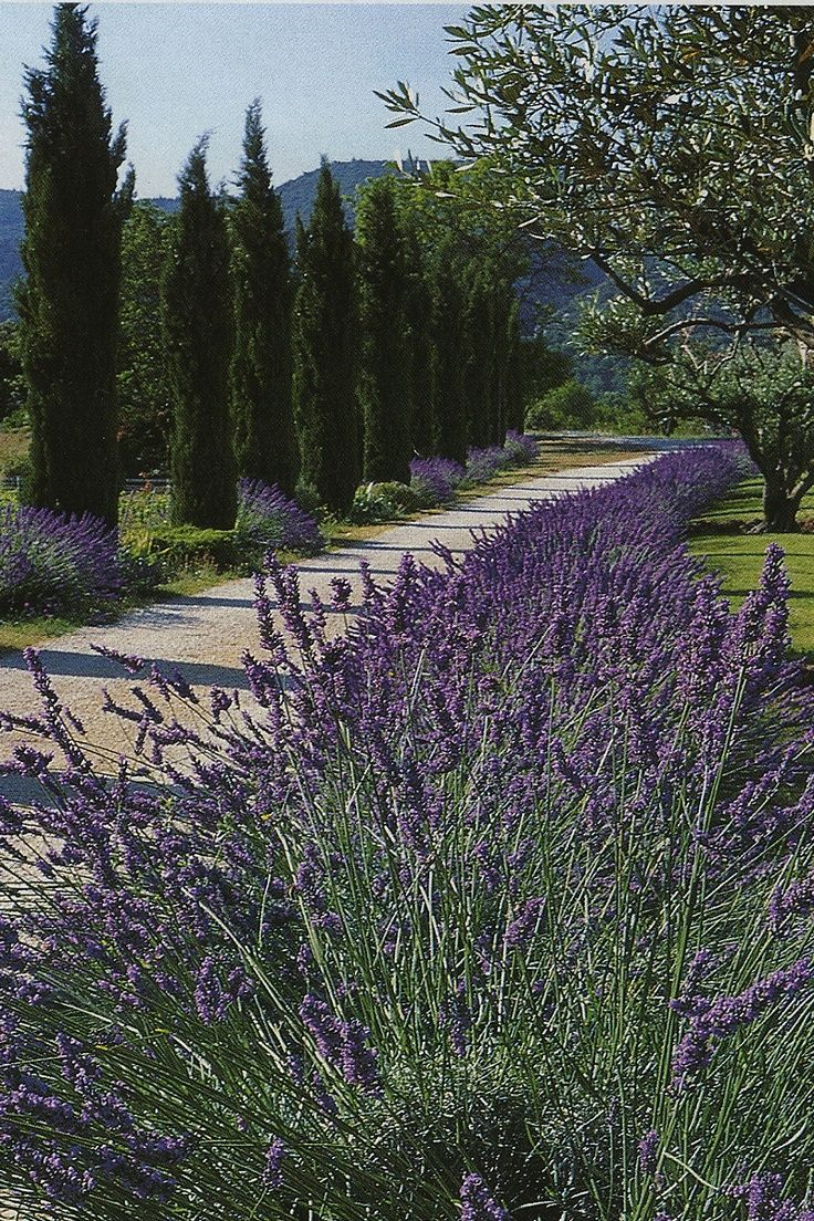 Love the pines and lavender..