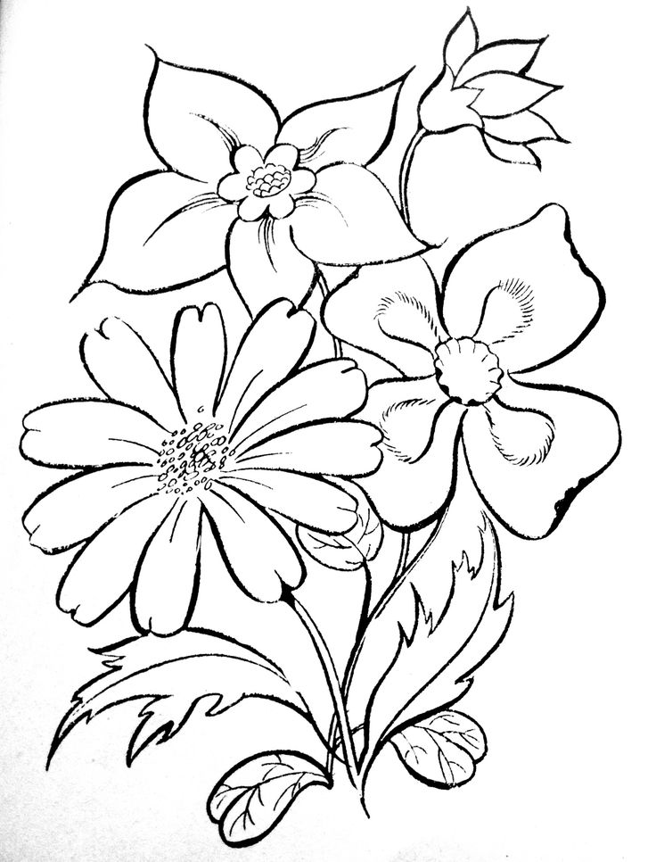 589 best coloring pages  u0026 basic patterns  templates for