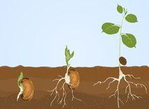 germination Photographie stock libre de droits