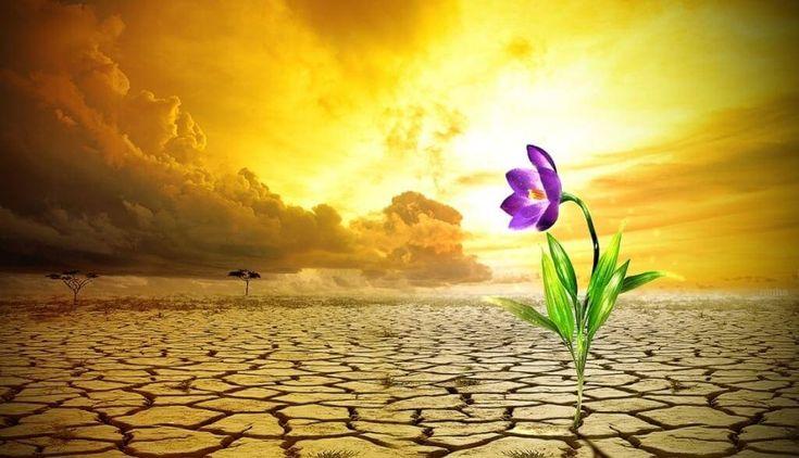 É preciso aprender como a desenvolver a resiliência para conseguir enfrentar a dor e as adversidades da vida, seguindo sempre em frente.
