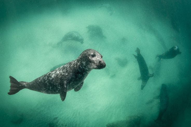 TG4 aired a two-part series on Ireland's wildlife in a stunning documentary that's been winning rave reviews online. Eire Fhiain has been dubbed Ireland's answer to Planet Earth. #EireFhiain
