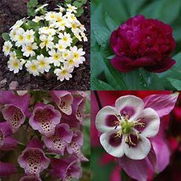 Die besten 17 ideen zu schattenpflanzen auf pinterest zimmerpflanzen schattenspendende - Zimmerpflanzen fur schatten ...