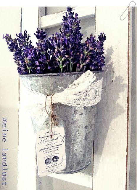 Lavendel                                                                                                                                                                                 Mehr