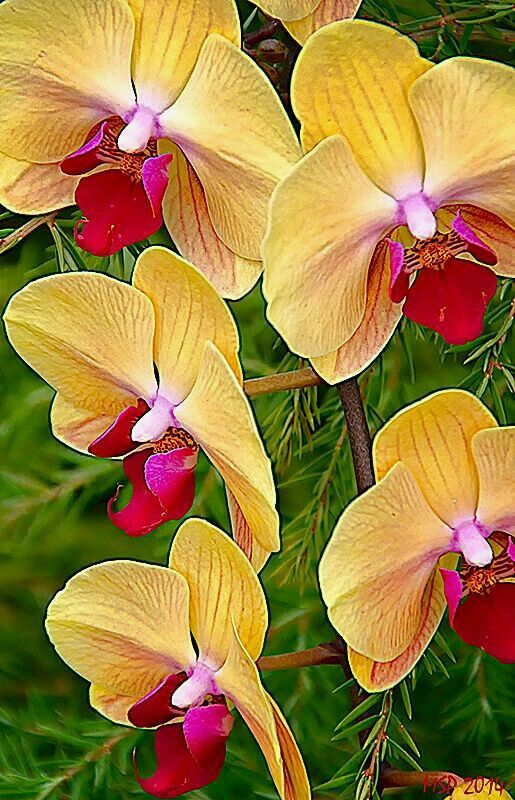 Beautiful Orchids!