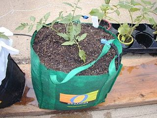Global Buckets Grow Bags Just Use Breathable Porous 400 x 300