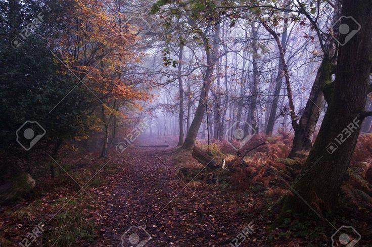 11311006-Paisaje-hermoso-bosque-de-bosque-de-niebla-brumosa-en-la-ca-da-del-oto-o-Foto-de-archivo.jpg (1300×864)